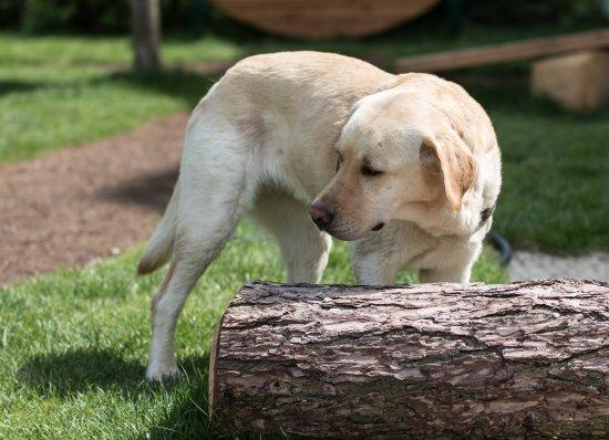 Garten Hotel Magdalena: Lilly auf dem neuen Hundespielplatz