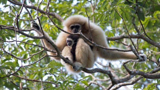 Flight of the Gibbon (Chiang Mai, Thailand): Top Tips ...