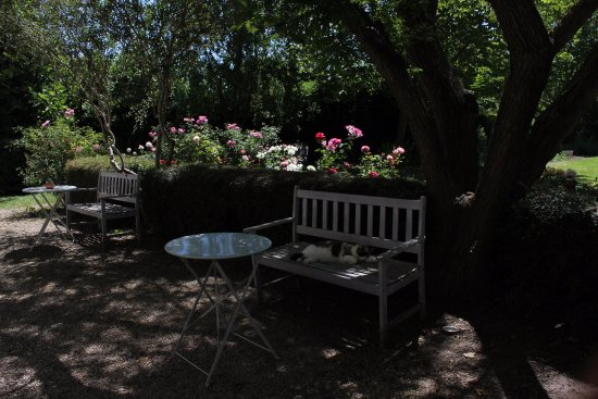Mas de la Forge : A shady spot on the grounds with their house kitty.