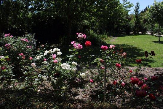Mas de la Forge : Rose bushes just outside our room.