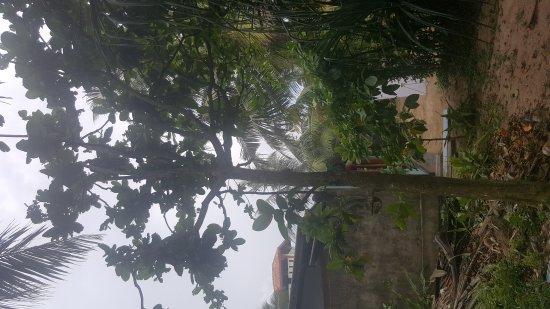 Habaraduwa, Σρι Λάνκα: 20170404_145302_large.jpg