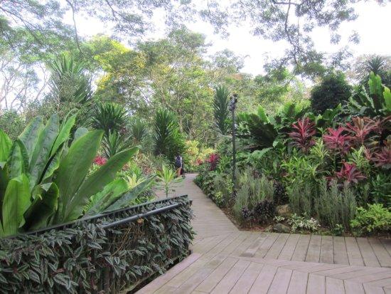 Garden photo de jardin botanique de singapour singapour for Jardin botanique singapour