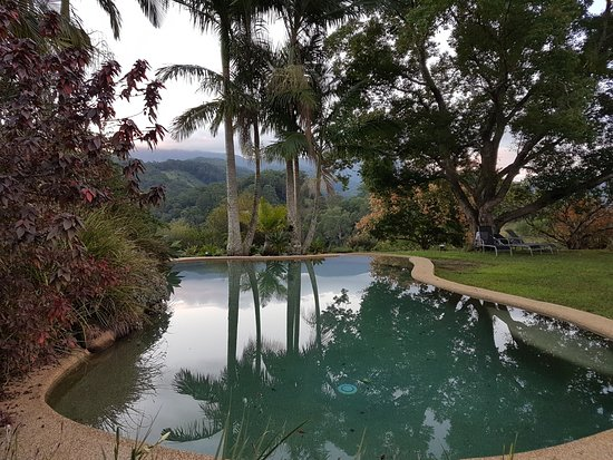 Murwillumbah, Australia: The gorgeous pool and garden area