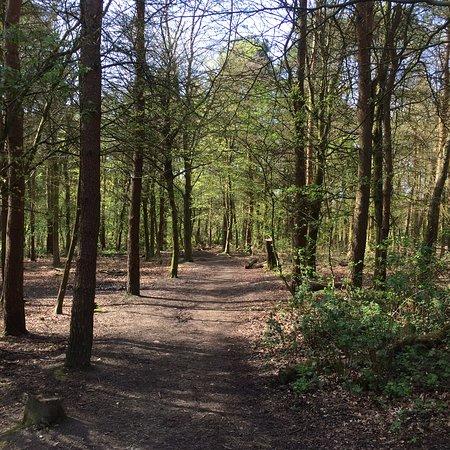 Skelmersdale, UK: Woodands