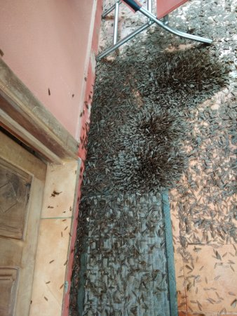 Awesome Upasana Retreat: Thousands Of Insect Outside And They Did Not Clean Until  We Checkout In