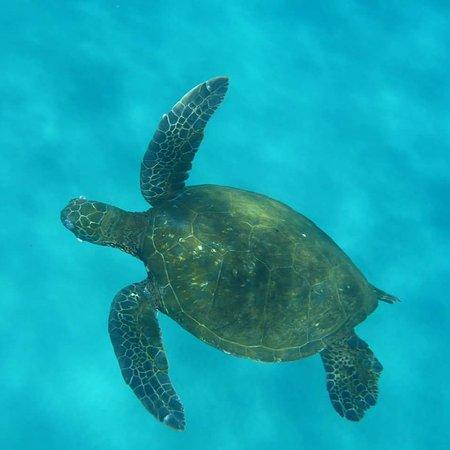 Sheraton Maui Resort & Spa: IMG_20170405_061202_414_large.jpg