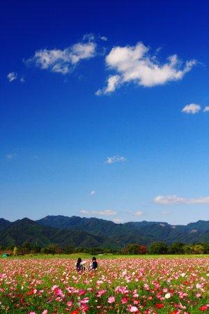 Saito, Japan: 秋の西都原公園