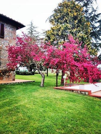 San Rocco a Pilli, İtalya: Giardino in primavera