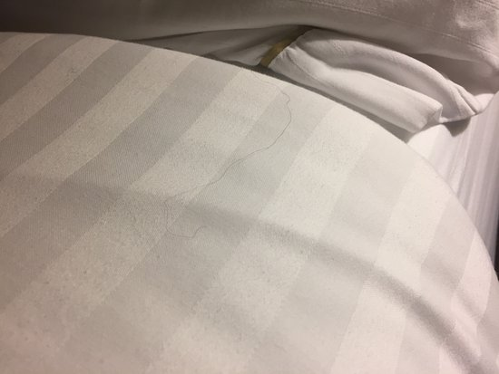 Holiday Inn Express Cullman: Hair in the bed linens