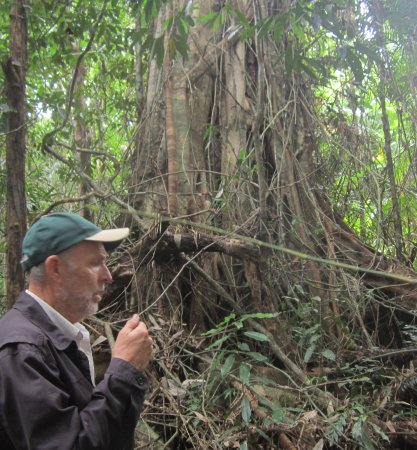 Tony's Tropical Tours: Gary describes the life of the tree