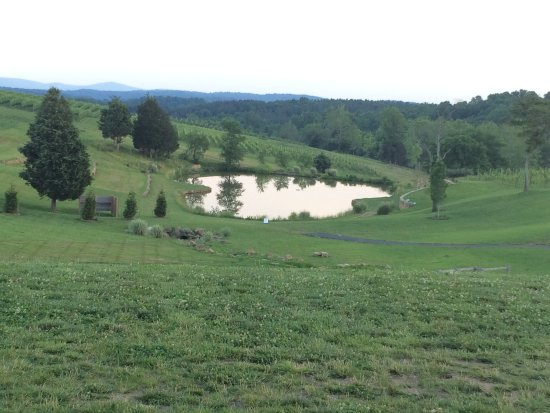 Leesburg, VA: The view from the terrace of the winery