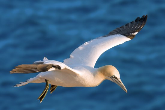 Hop On Hop Off Islands: Bird Watching Ria Formosa Natural Park - Hop On Hop Off Faro