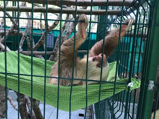 Sloth Sanctuary of Costa Rica照片
