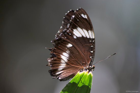 Texas Discovery Gardens : One of the many butterflies posed for us