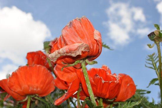 Oberndorf, Austria: vergängliche Blütenpracht