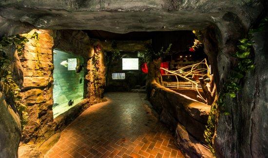 St Andrews Aquarium: New for 2017- Amazing Amazon