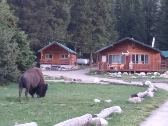 Pine Edge Cabins: Breakfast guest