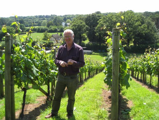 Budleigh Salterton, UK: Alan Pratt in his vineyard.