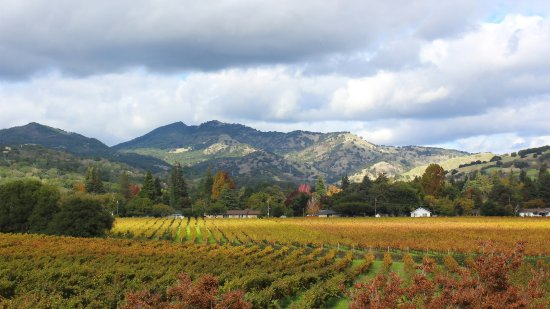 Fairfield, CA: Vineyard view from the tasting room