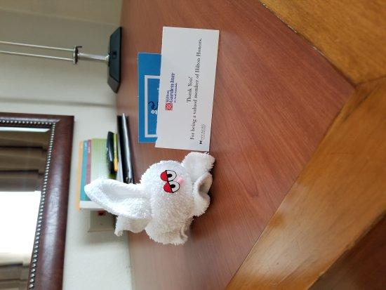 Oakdale, MN: My Bunny