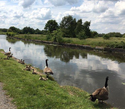Leigh, UK: photo2.jpg