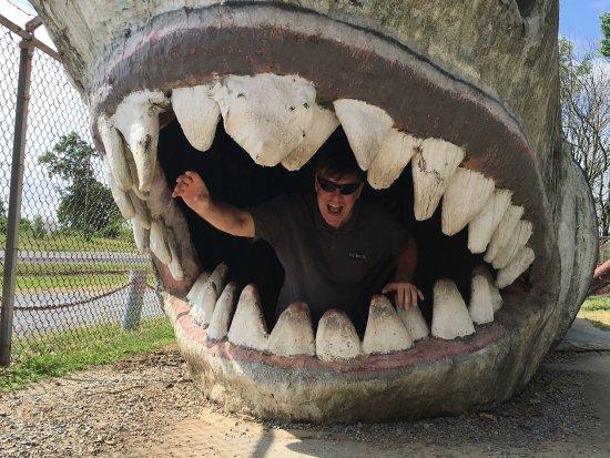 Dinosaur Land: photo7.jpg