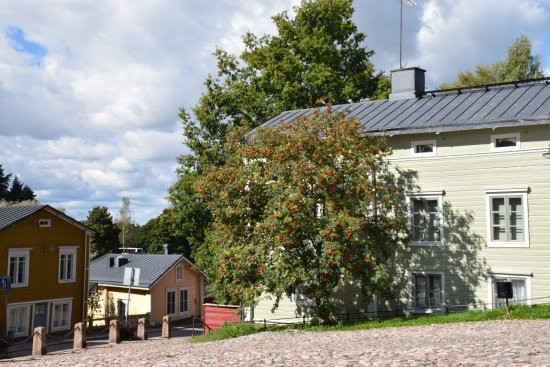 Porvoo Old Town: Mountain Ash viewed across the town's square