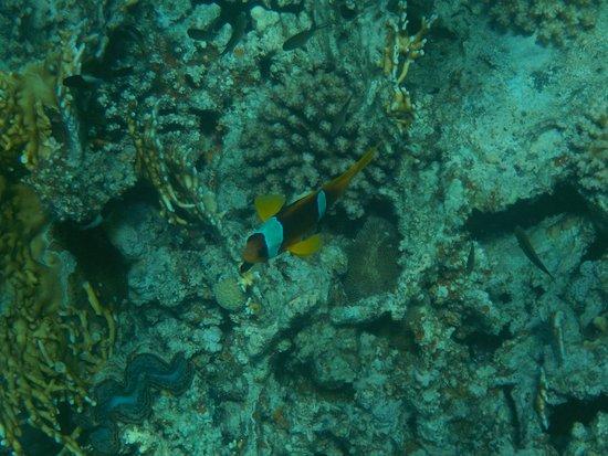 Marsa Shoona Bay