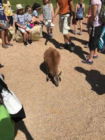 Apple Valley, MN: Kangaroo Crossing