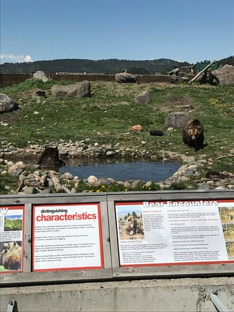 Bozeman, Μοντάνα: Bears in the background with the signage up front
