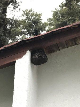 Cabanas El Estribo Hotel: Avispas justo en el patio de la cabaña en donde está la parrilla para asar carne