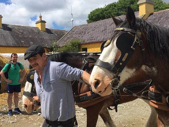 Muckross Traditional Farms: Big, but docile draft horses led to the task.