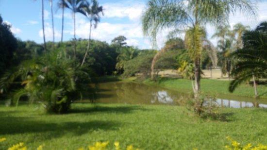 Botanical Gardens Municipal Paulinia Adelmo Piva Junior