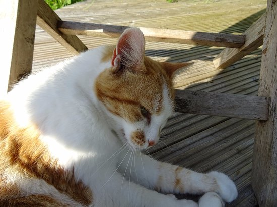 Umberleigh, UK: Millie, the most talkative cat