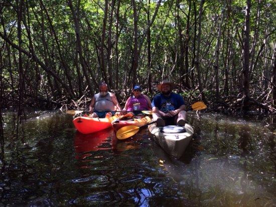 Almost Heaven Kayak Adventures : Lido Mangrove Tour