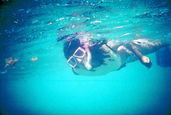 Quicksilver Snorkel Tours: Snorkeling