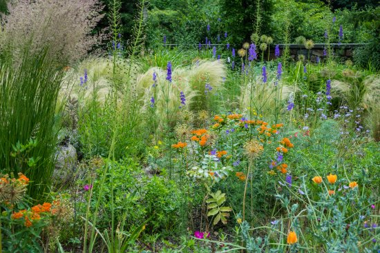 Chanticleer: Just a small part of the meadows in colorful bloom in June