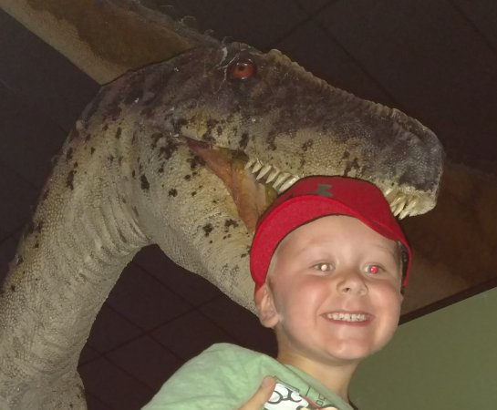 Branson Dinosaur Museum: IMG_20170616_133755_large.jpg