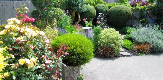 Loleta, Καλιφόρνια: garden