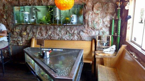 Marshall, MI: fish tank in the corner