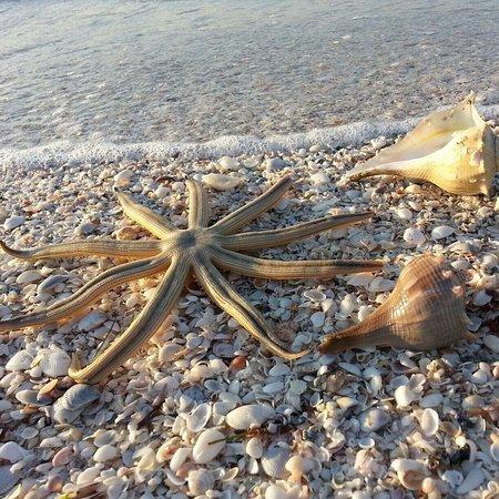 Sanibel Siesta on the Beach : photo4.jpg