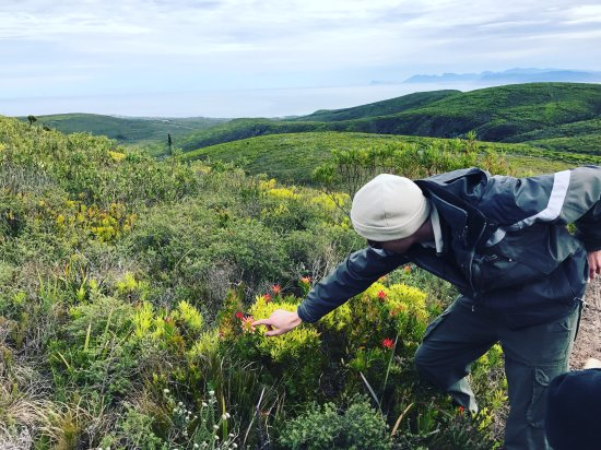 Grootbos Private Nature Reserve, Afrique du Sud : Our guide Ross, in the field