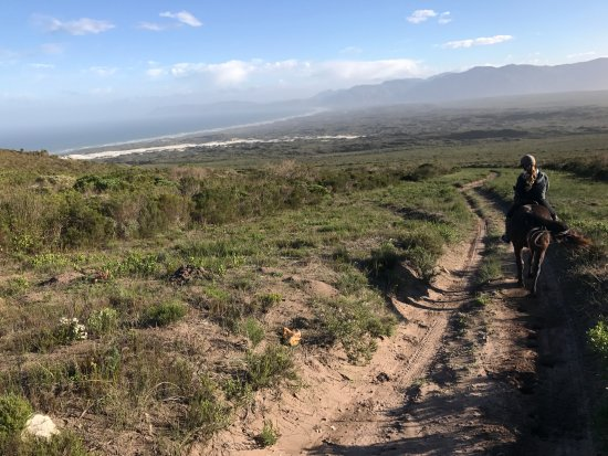 Grootbos Private Nature Reserve, Sydafrika: Horse riding experience