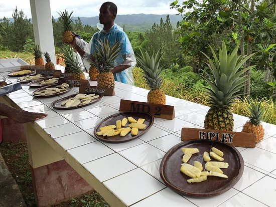Croydon Plantation: Pineapple tasting