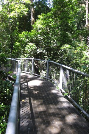 Cow Bay, Australia: Raised walkways through the forest.