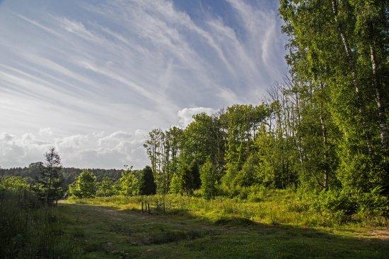 Goudhurst, UK: The Pinetum Trail