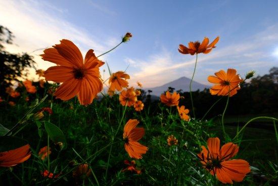 Unduh 51 Background Pemandangan Flower Gratis