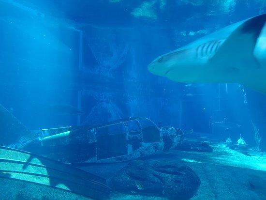 uShaka Sea World Aquarium: Interesting place to watch different fishes