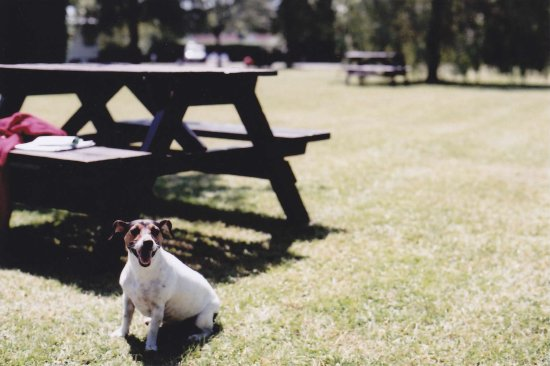 Sparkford, UK: Dog friendly