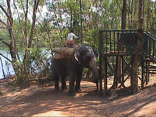 Elephant Sanctuary at Neyyar Dam Kerala - India - Picture ...